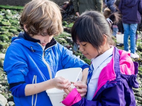 Young Marine Biologists